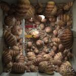 ioxu_01_railsemaphore_01_03_snails_01
